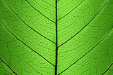 Background of Green Leaf cell structure - natural texture