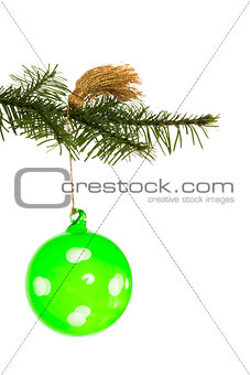 Green christmas decoration hanging from branch