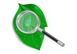 Magnifying glass with green leaves and waterdrops