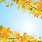 Maple autumn background, vector