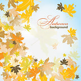 Maple autumn background, vector