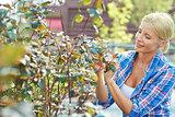 Hobby of gardening