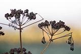Dry meadow plants