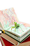 Green mantis on an old book, close up, selective focus. Mantodea