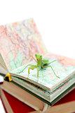 Green mantis on an old book, close up, selective focus. Mantodea