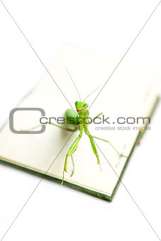 Green mantis on an old book, close up, selective focus. Smile! M