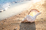 seashell background