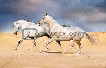 Akhal-teke horses in the desert sunset