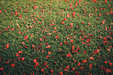 Red flower on grass vintage