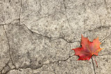 Red maple leaf on cracked concrete