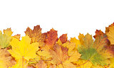 Colorful autumn maple leaves frame