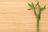 Bamboo plant over wooden table