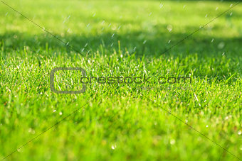 Green grass sunny field