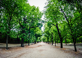 Road through row of green trees in a park