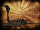 Cobra snake on grunge background