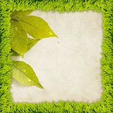 Grass frame with leaves