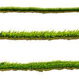 Green grass lines