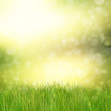 Green grass on abstract background