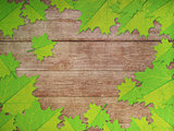 Green maple leaves over wooden background