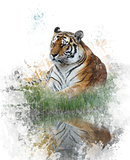 Watercolor Image Of Tiger
