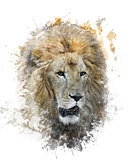 Watercolor Image Of Lion Head