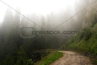 Fog in the forest of Paneveggio, Trentino - Dolomites