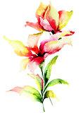 Original Lily flowers