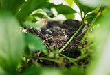 Little Bird Nestlings in the branch