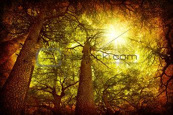 Cedar tree forest