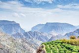 Trees Jebel Akhdar Oman