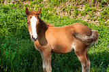 Foal amid green vegetation