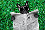 cool dog newspaper