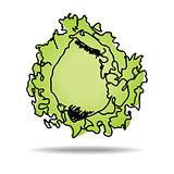 Freehand drawing iceberg lettuce icon