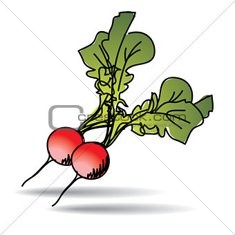 Freehand drawing radish icon