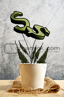 Growing dollars in flower pot, conceptual image