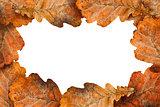 Dry oak leaves as frame