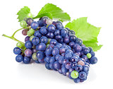 Cluster blue grapes with green leaf