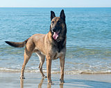 malinoison the beach