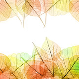 Frame of Autumn color transparent Leaves - isolated on white