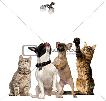 Cats and Dogs trying to catch a bird flying