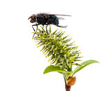 Fly on a plant