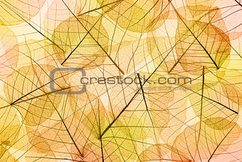 Autumn Leaves yellow and orange Background