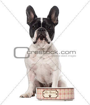 French Bulldog (3 years old)