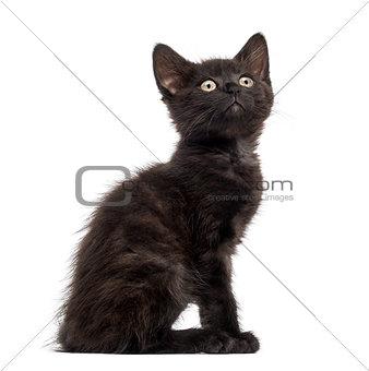 Black cat, kitten (2 months old)