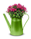 Green retro watering can with red chrysanthemum