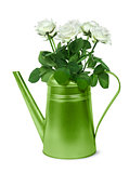 Green retro watering can with white roses