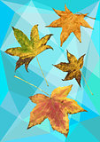 Autumn maple leaves in polygons