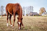 Horse feeding outdoors