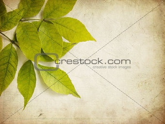 Grunge Green Leaves