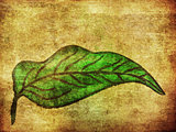 Grunge hand drawn green leaf